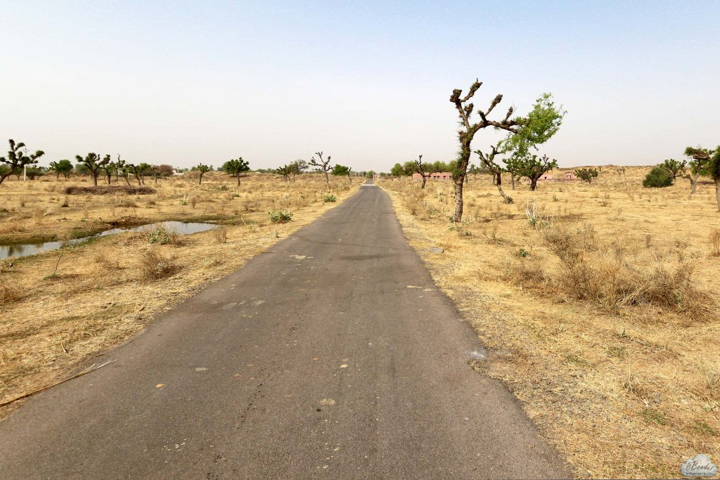 Alsisar village is a semi arid region. Further west to Alsisar and on this road (not the highway) lies the Thar desert.